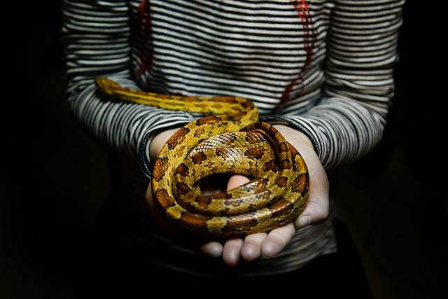 Snakes Alive and Ready to Be Loved at the Samford Show